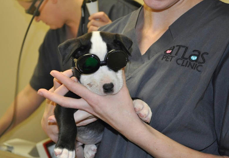 Laser-Therapy-copy