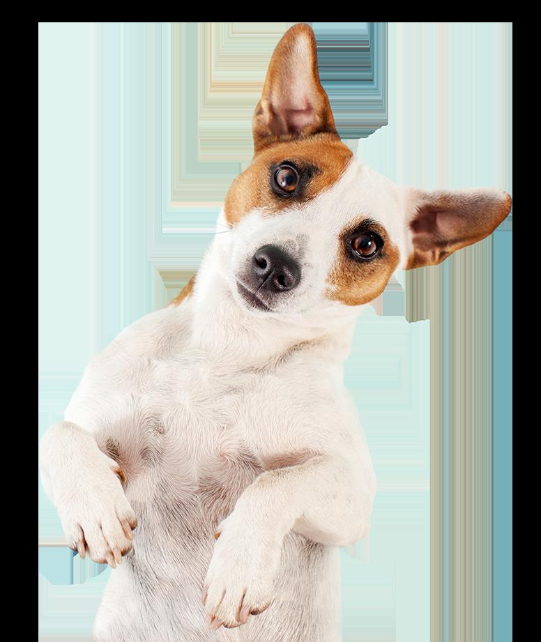 folksy-dog-footer-1