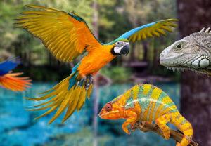 Exotic & Pocket Pets