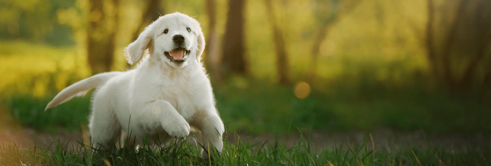 dogingrass-1-min