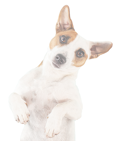 folksy-dog-footer-2