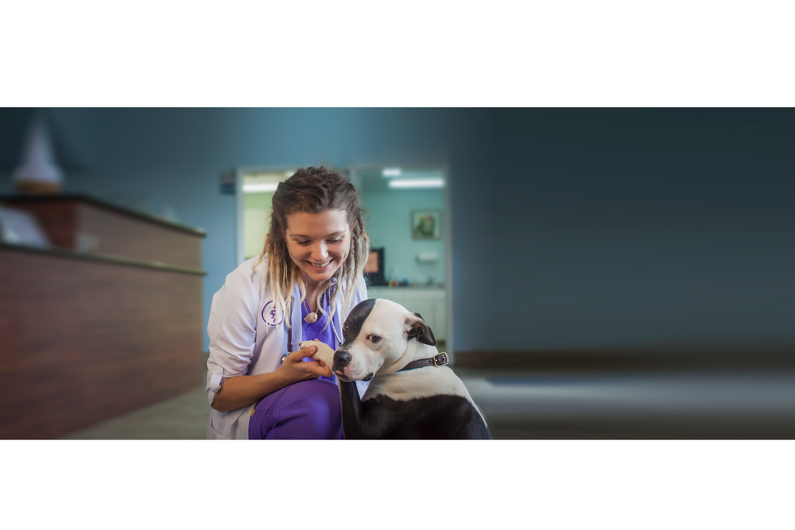 vet-looking-at-dogs-paws