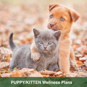 wellness plan puppy kitten v2 300x300 1