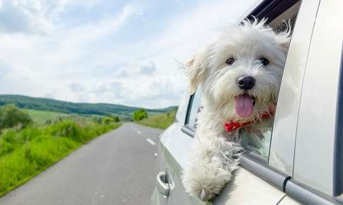 Can I Leave My Pet in the Car?