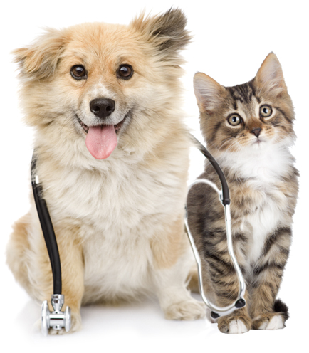 Dog-and-Cat-Vet