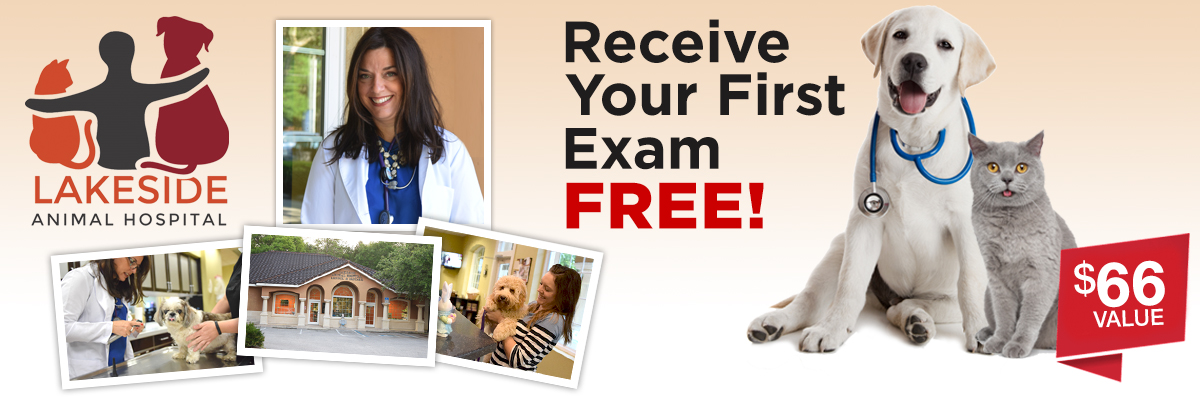 Your Pets First Exam Is Free Facebook