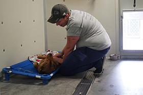 veterinarian with pet