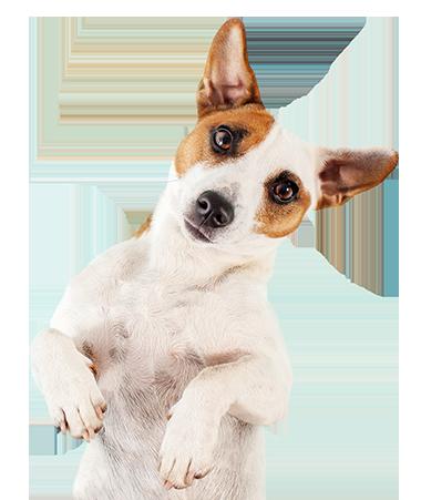 folksy-dog-footer-2