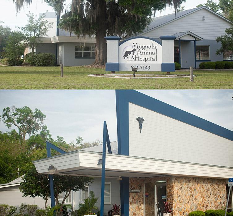 Ocala Veterinarian | Magnolia Animal Hospital