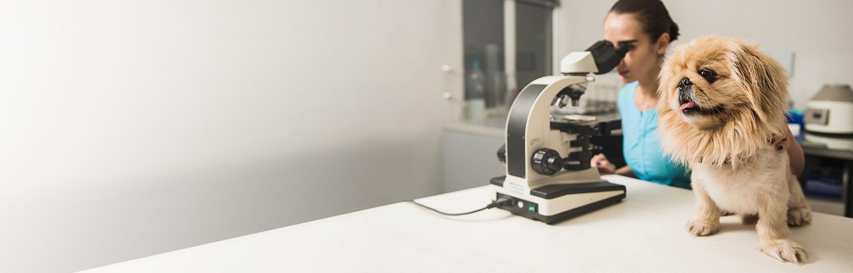 diagnostics and laboratory