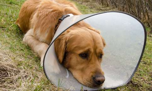Hot Spots and Pets: What You Can Do to Help Your Furry Friend