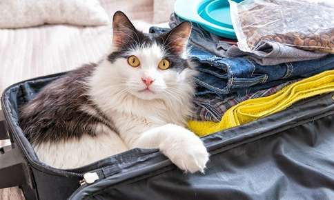 Should You Leave Your Cat Alone for a Long Weekend?