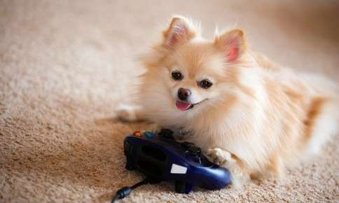 Video Games and Your Pet